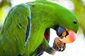 Macaw is eating — Stock Photo