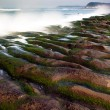 Rocky Seacoast full of green seaweed - Stock Photo