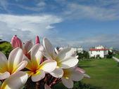 Frangiapani flower with blue sky — Stock Photo