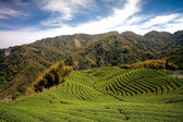 Ba Gua Tea garden in mid of Taiwan, This is the very famous area known for — Stock Photo