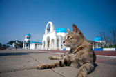 Greek Architecture with bule sky with a cat — Stock Photo