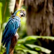 Colorful scarlet macaw perched on a branch — Stock Photo