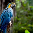 Stock Photo: Colorful scarlet macaw perched on branch