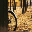 Royalty-Free Stock Photo: Bicycle wheel in the yellow