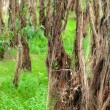 Flood-plain forest — Stock Photo
