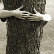 Hands clasping the tree — Stock Photo