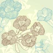 Кампсис цветы — Cтоковый вектор