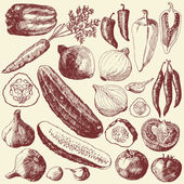 Vegetable set. — Stock Vector