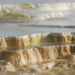Stock Photo: Mammoth Hot Springs Yellowstone Np