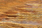 Mamuta gorących źródeł np yellowstone — Zdjęcie stockowe