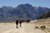 Trekking to Colca canyon — Stock Photo