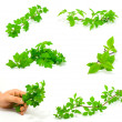 Set of green branches — Stock Photo