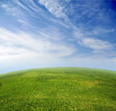 Green grass, blue sky in fish-eye lens — Stock Photo
