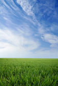 Green grass and blue summer sky — Stockfoto