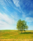 Birch on a spring day — Stock Photo
