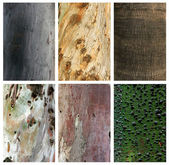 Photo collage of exotic wood trunks and textures — Stock Photo