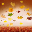 Autumn style studio background - Stock Photo