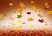 Autumn style studio background — Stock Photo