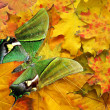 Stock Photo: Red autumn with green butterfly