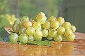 在绿色的葡萄 — 图库照片