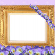 Stock Photo: Frame in frame from viola
