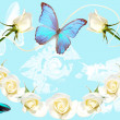Frame from white roses on blue background -  