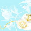 Frame from white roses on blue background - Photo