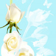 Frame from white roses on blue background — Stockfoto