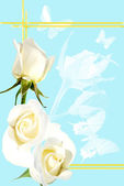 Frame from white roses on blue background — Стоковое фото