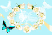 Frame from white roses on blue background — 图库照片