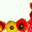 Varicoloured tulips for embellishment — Stock Photo