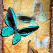 Butterflies on old vellum — Foto de Stock