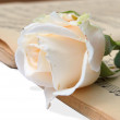 Pink rose with note — Stock Photo