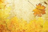 Kırmızı sonbahar yaprak — Stok fotoğraf