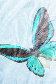 Mariposa para la congelación de vidrio — Foto de Stock