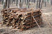 Mucchio di legna da ardere — Foto Stock