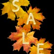 Autumn leaf for sale — Foto de Stock