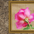 Rose with frame — Stock Photo