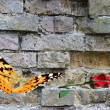 Butterfly on background  wall — Stock Photo
