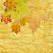 Autumn leaf on old paper — Stock Photo