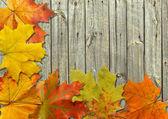 秋天叶 — 图库照片