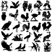 Bitar av detaljerade vectoral fågel silhuetter. — Stockvektor