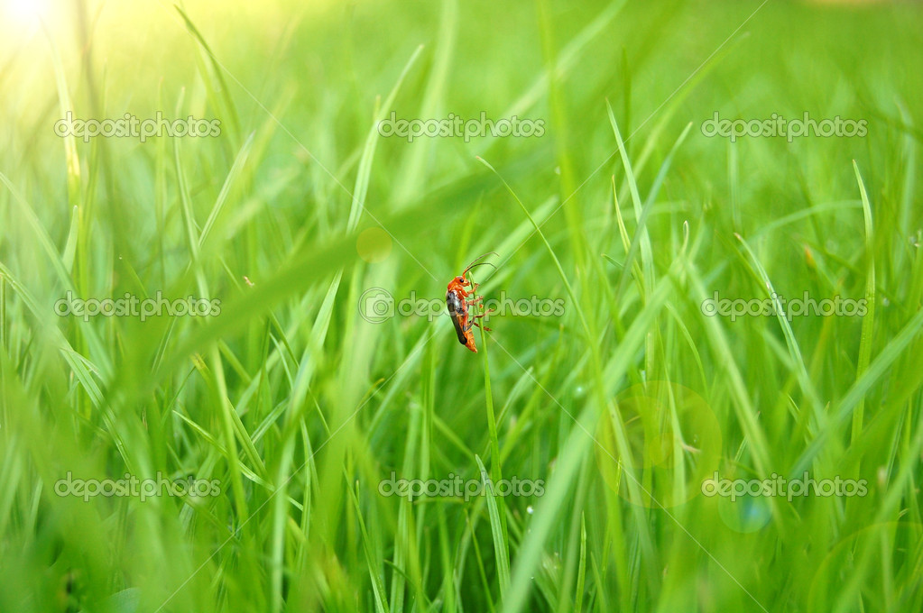Fresh green grass in the sun and insects. — Stock Photo #3215928
