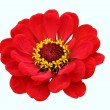 Foto Stock: Red flower