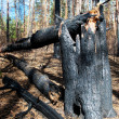 Broken trees - Stock Photo