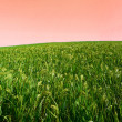 Crop landscape — Stockfoto