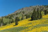 Ladera de la montaña de montana — Foto de Stock