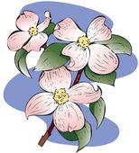 Cornus florida rosso — Foto Stock