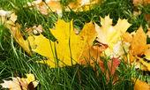 žluté listy 2 — Stock fotografie