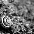 Snail — Stock Photo #3444499